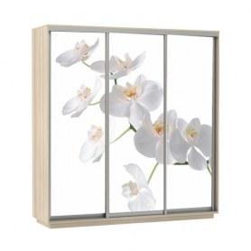 Шкаф-купе Трио фотопечать Белая орхидея, 2400х600х2400, шимо светлый