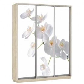 Шкаф-купе Трио фотопечать Белая орхидея, 2100х600х2200, дуб сонома